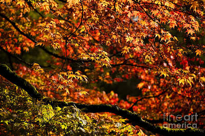 Autumn's Glory Poster by Anne Gilbert
