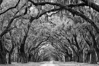 Avenue Of The Oaks Savannah Poster by Keith Dotson