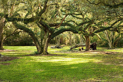 Avery Island Oaks Poster by Scott Pellegrin