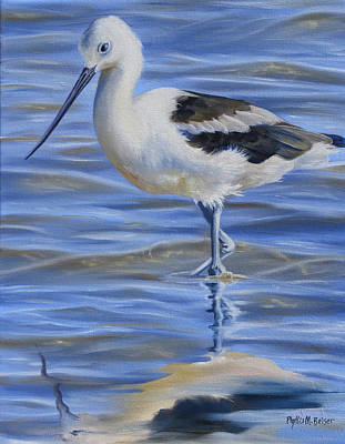 Avocet Poster by Phyllis Beiser