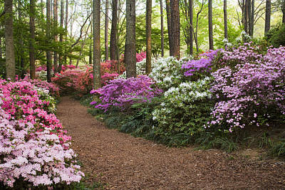 Azalea Trail Poster by Eggers   Photography