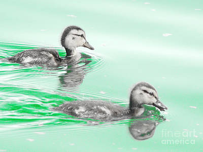 Baby Ducklings Poster by Beverly Guilliams