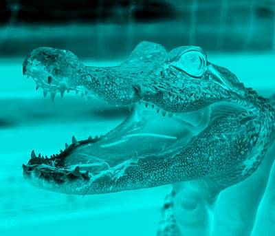 Baby Gator Neg Aquamarine Poster by Rob Hans