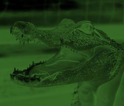 Baby Gator Neg Olive Green Poster by Rob Hans