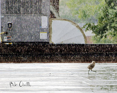Birdwatching Poster featuring the photograph Baby Seagull Running In The Rain by Bob Orsillo