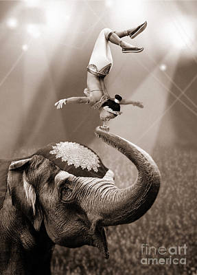 Balancing Act Poster by Jon Neidert