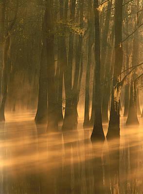 Bald Cypress Swamp Calcasieu River Poster by Tim Fitzharris