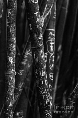 Bamboo Destruction Poster by Liesl Marelli
