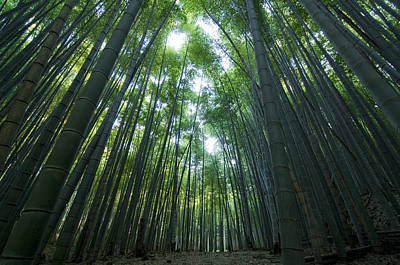 Bamboo Forest Poster by Aaron S Bedell