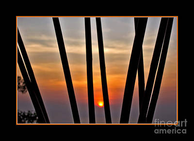 Bamboo Sunset - Black Frame Poster by Kaye Menner