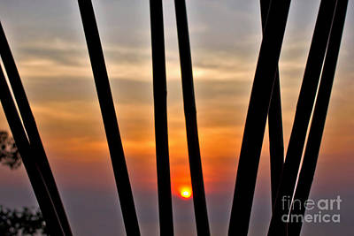 Bamboo Sunset Poster by Kaye Menner