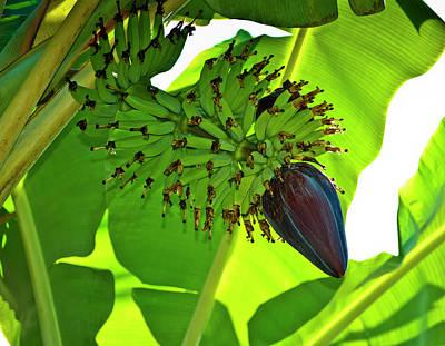 Banana Nut Poster by Christi Kraft