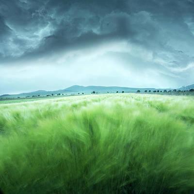 Barley Field Poster by Floriana Barbu