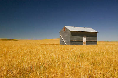 Barn At Choteau Montana Painted Poster by Rich Franco