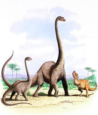 Barosaurus Dinosaurs Poster by Deagostini/uig
