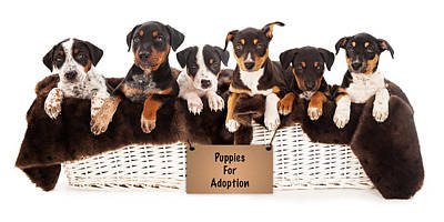 Basket Of Mixed Breed Puppies Poster by Susan Schmitz