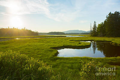 Bass Harbor Marsh At Dusk Poster by Diane Diederich