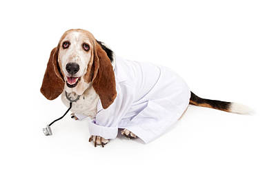 Basset Hound Dressed As A Veterinarian Poster by Susan Schmitz