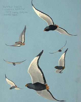 Bateleur Eagles Poster by Louis Agassiz Fuertes
