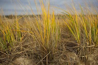 Beach Grass Poster by Allan Morrison