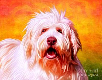 Bearded Collie Poster by Iain McDonald