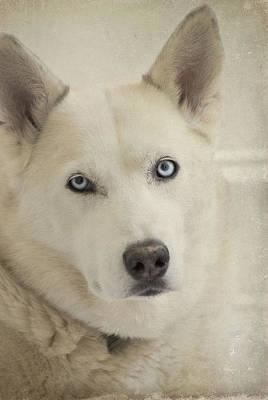 Beautiful Blue Eyes Poster by Cindy Rubin