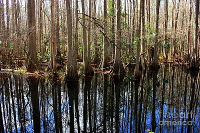 Beautiful Day In The Cypress Swamp Poster by Carol Groenen