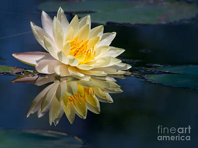 Beautiful Water Lily Reflection Poster by Sabrina L Ryan
