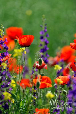 Beauty Colorful Flowers Poster by Boon Mee