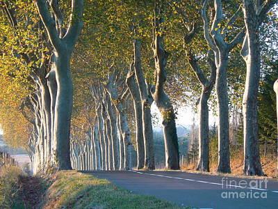 Beloved Plane Trees Poster by France  Art