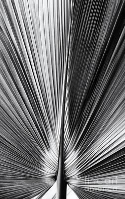 Bermuda Palmetto Monochrome Poster by Tim Gainey