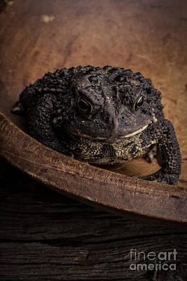Big Black Toad Poster by Edward Fielding