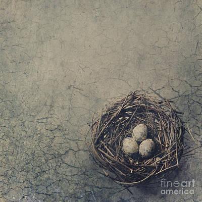 Bird Nest Poster by Jelena Jovanovic
