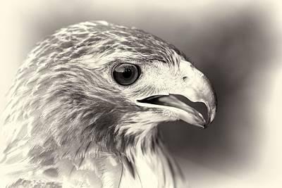 Bird Of Prey Poster by Dan Sproul