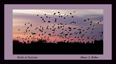 Birds At Sunrise Poster Poster by Aimee L Maher Photography and Art Visit ALMGallerydotcom