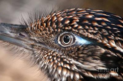 Bird's Eye View Poster by Dan Holm