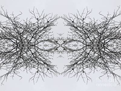 Birds In The Branches 2 Poster by Sarah Loft