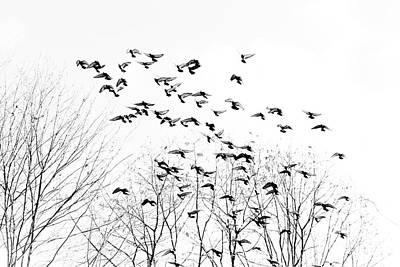Birds Poster by Kevin Barske