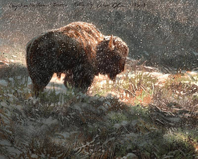 Bison In The Snow Poster by Aaron Blaise