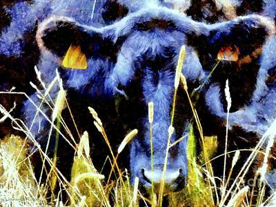 Black Angus Cow  Poster by Janine Riley