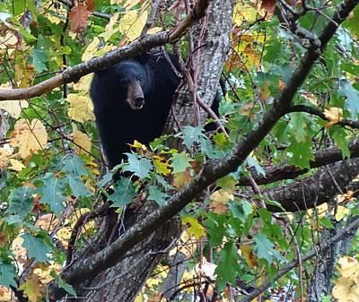Black Bear Poster by Dan Sproul