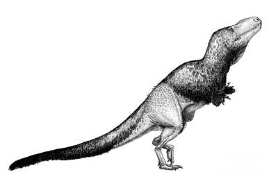 Black Ink Drawing Of Daspletosaurus Poster by Vladimir Nikolov