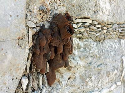 Black Wasp Nest Poster by Daniel Sambraus