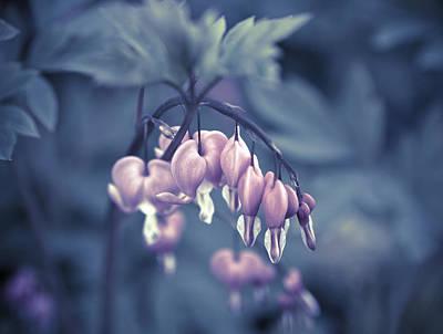 Bleeding Heart Flower Poster by Frank Tschakert