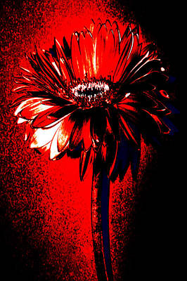 Bloody Mary Zinnia Poster by Sherry Allen