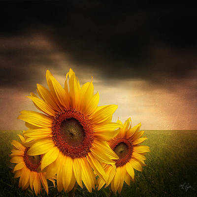 Bloom In Gloom- Sunflower Art Poster by Lourry Legarde