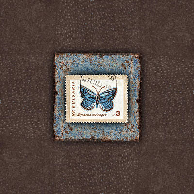 Blue Butterfly On Copper Poster by Carol Leigh