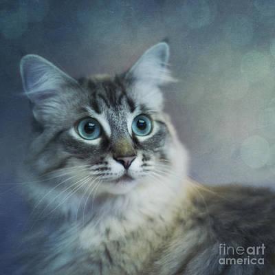 Blue Eyed Queen Poster by Priska Wettstein