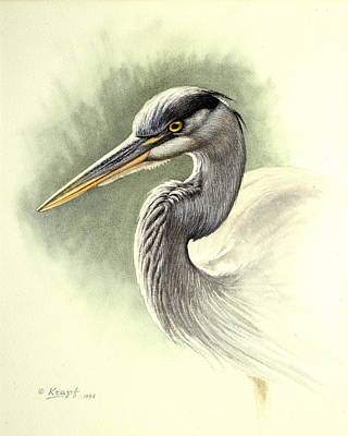 Blue Heron   Poster by Paul Krapf