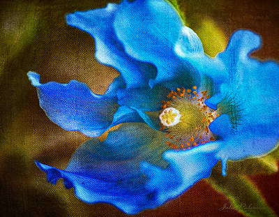 Blue Himalayan Poppy Poster by Julie Palencia